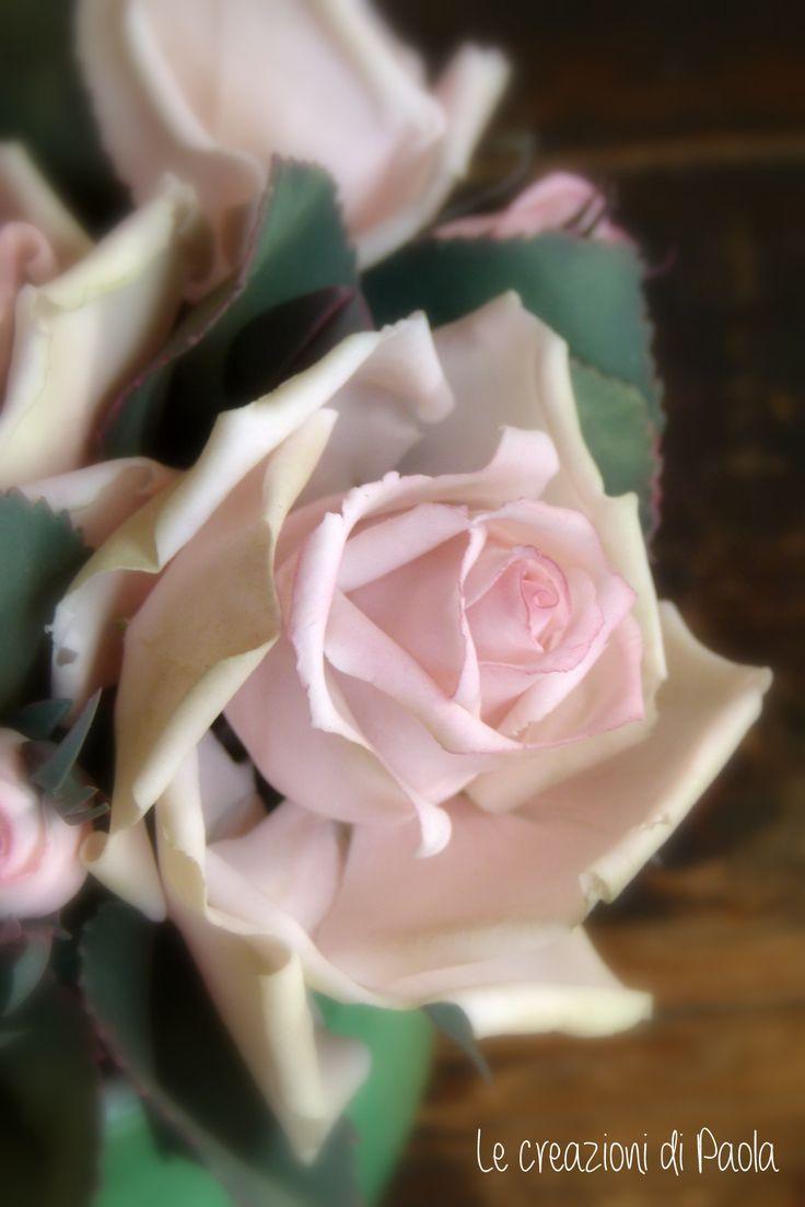 Rosa composizione monocolore