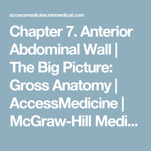 Chapter 7. Anterior Abdominal Wall | The Big Picture: Gross Anatomy | AccessMedicine | McGraw-Hill Medical