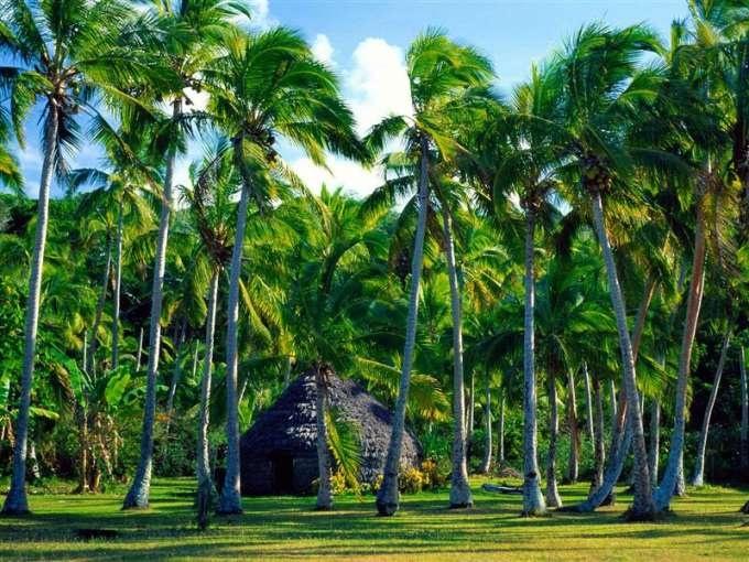 Lifou Island Traditional Hut
