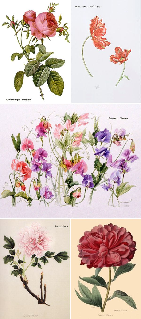 Garden flowers names - Bridal Blooms Spring Garden Flowers