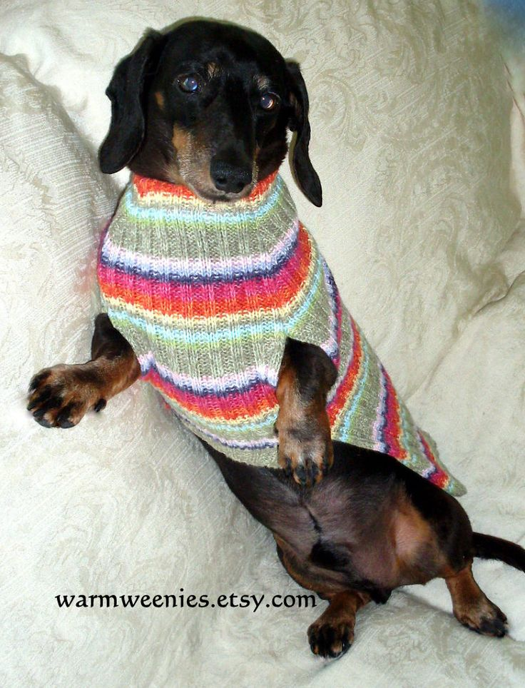 Smaller sized WarmWeenies dachshund sweater jumper in a cotton rib knit.