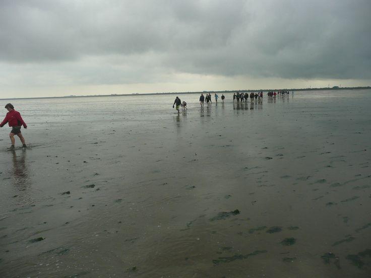 wadlopen voor de kust van Pieterburen Groningen.