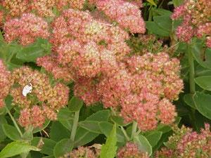 Flower Garden Ideas Colorado 34 best gardens images on pinterest   native plants, xeriscape
