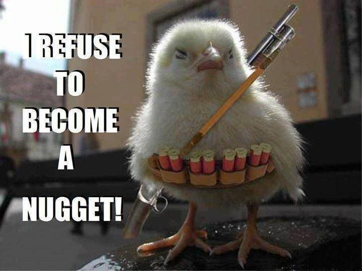 1000 Ideas About Funny Chicken Pictures On Pinterest: 40 Best Chicken Memes Images On Pinterest