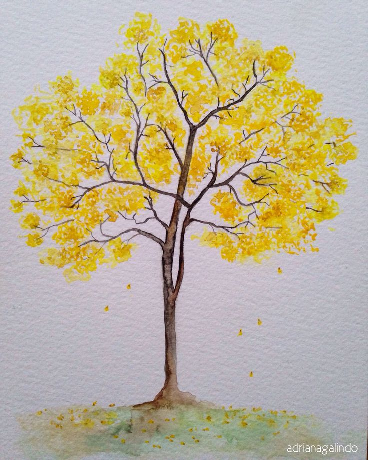 Copyright by Adriana Galindo - Ipê-amarelo, brazilian tree, n.11, aquarela watercolor 21 x 15cm. #40treesproject natureza nature drigalindo1@gmail.com
