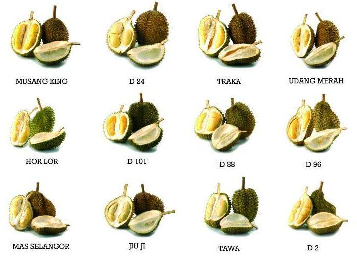 11 Jenis Buah Durian Popular Dan Digemari Di Malaysia Petani
