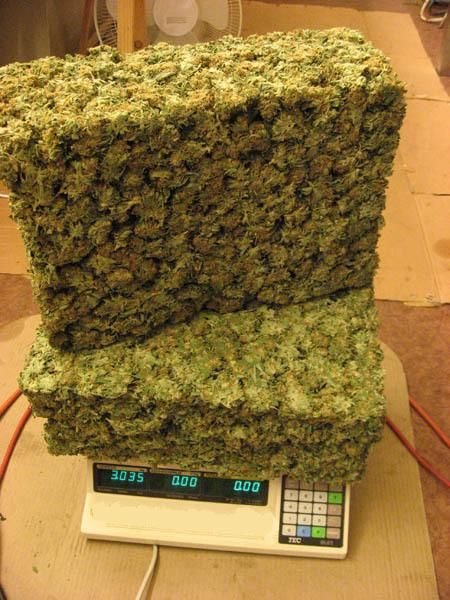 growing marijuana with hydroponics httpwwwmjseedscanadacomgrowing