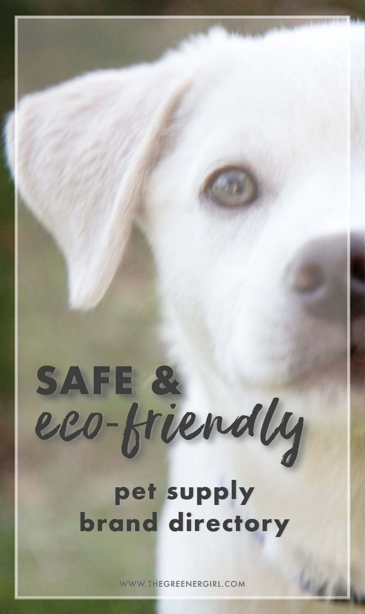 Holistic And Eco Pet Supply Directory Pet Supplies Pets Eco