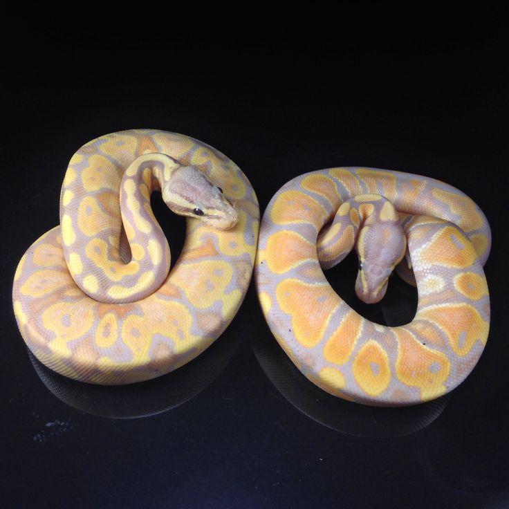 1701 Best Schlangen Images On Pinterest