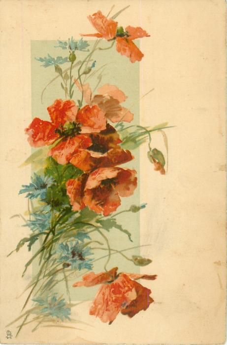 Red poppies & a few blue cornflowers postcard, C.Klein, 1904