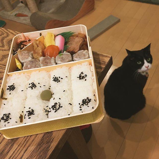 崎陽軒のシウマイ弁当。 私が疲れてると言ったら夫がお弁当でいいよと言ってくれたので楽させて貰いました。 横浜出身の夫と知り合ってから食べるようになりましたが冷めても美味しいお弁当ってシウマイ弁当くらいかなと思います。 あんずはデザート的な感じで最後に頂きます。  #猫#ねこ #cat #ねこ部 #元野良猫 #保護猫 #黒猫 #デブ猫 #愛猫 #日本猫 #はちわれ #クロ #tuxedocat #catstagram #崎陽軒 #シウマイ弁当