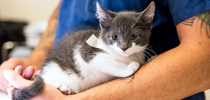 Our comprehensive database will help you find low-cost spay/neuter programs in your community.