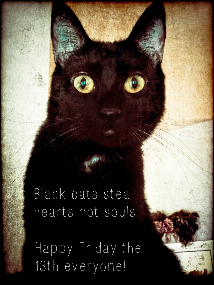 38 best images about life amp family on pinterest cats