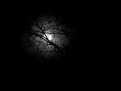 Black and white photography: Kuu kauniina lehdettömien puiden takana