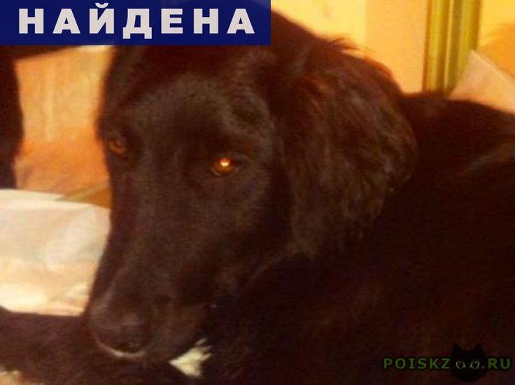"""Найдена собака кобель г.Краснодар http://poiskzoo.ru/board/read23889.html  POISKZOO.RU/23889 Найдена собака в ЮМР, рядом с рестораном """"Наш двор"""". Окрас черный, белое пятно под нижней челюстью. На шее .. ошейника: один из них ярко-зеленого цвета.   РЕПОСТ! @POISKZOO2 #POISKZOO.RU #Найдена #собака #Найдена_собака #НайденаСобака #Краснодар"""