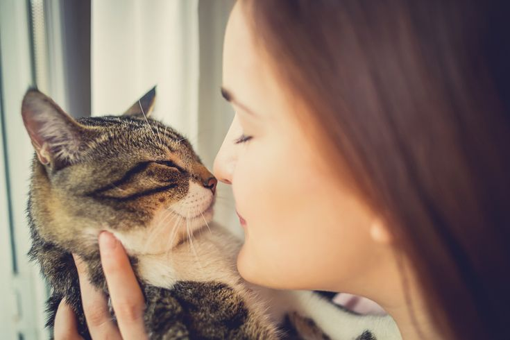 Eteeristen+öljyjen+tuoksuttaminen+kodissa+voi+olla+vaarallista+kissoille