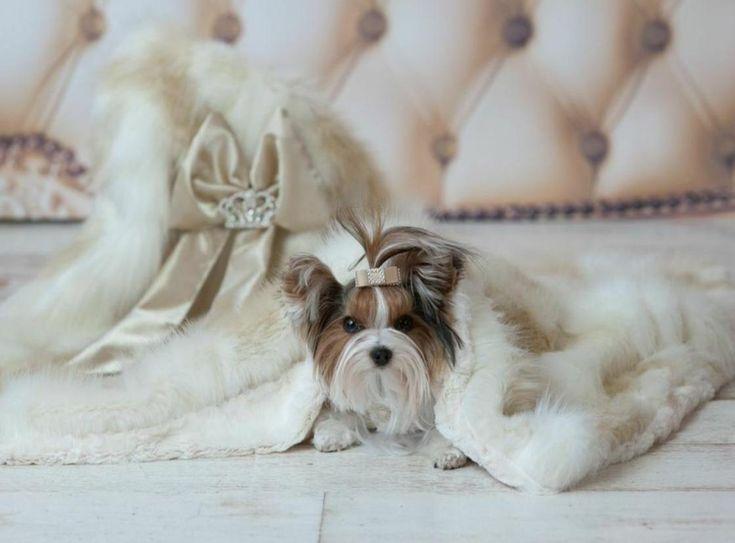 Champagne Lux Faux Fur Blanket