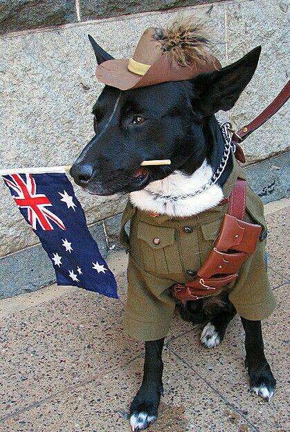 ... Anzac Day Dog....