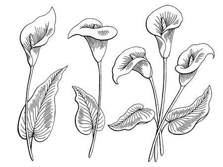 Callas Flower Graphic Black And White Isolated Sketch Illustration In 2020 Lilies Drawing Flower Drawing Drawings