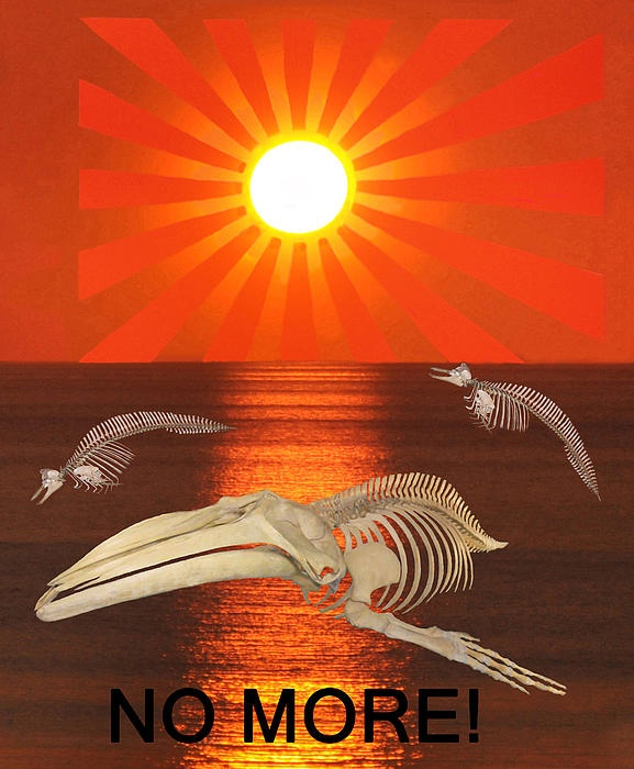 No More  A picture made to protest against the ongoing slaughter of dolphins and Whales http://eric-kempson.artistwebsites.com  www.epsilon-art.com