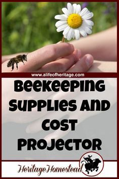 A complete list of beekeeping supplies: you should be well aware of what you will need to have ready and what the whole endeavor will cost.