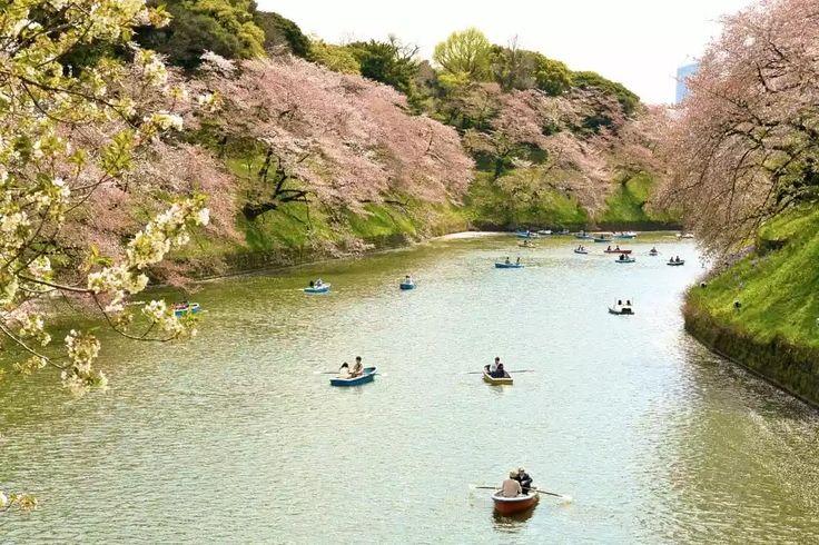 Osaka Castle      Nara Deer Park     Chureito Pagoda     Chidorigafuchi Moat     Arashiyama's Path of Bamboo    Continue bellow         P...