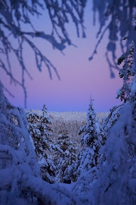 Forest at noon in Lapland by Erawan BrokenTale