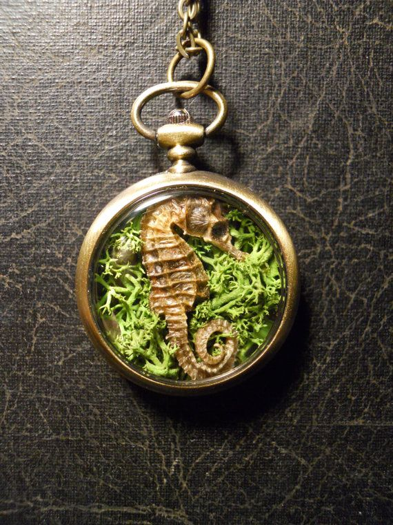 Nature Scape Seahorse Taxidermy Mummified by TheCuriositeer