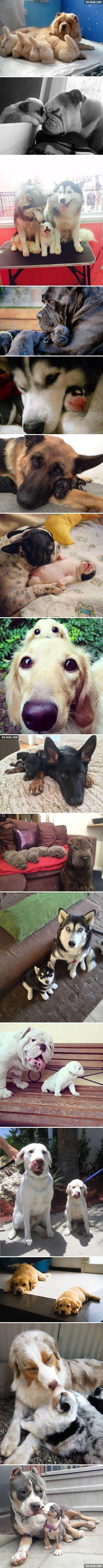 Fotos De Cães Com Seus Filhotes