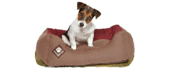 Choosing a dog bed that's right for your pet:  As any dog lover will attest, dogs can fall asleep pretty much anywhere; comfort doesn't seem to be as important as the reassurance of your presence. That said, it's important that man's best friends have their own dog beds.