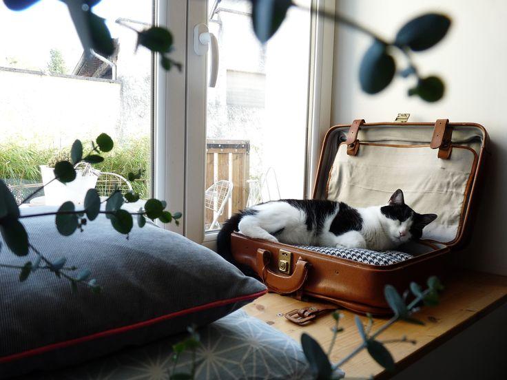 panier pour chat valise pour chat lit pour chat deco pinterest discover more ideas about cat. Black Bedroom Furniture Sets. Home Design Ideas