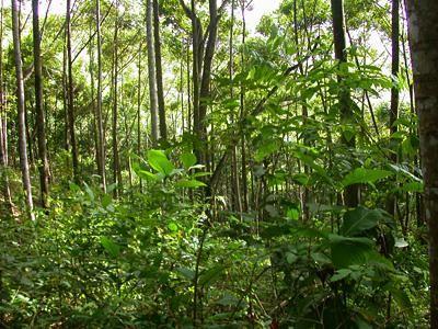 tsitsikamma forest image - Google Search