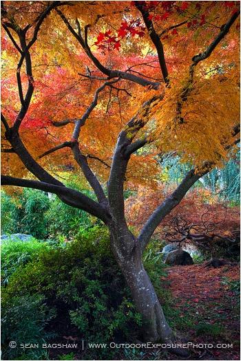 Sean Bagshaw. Fall , Ashland, Oregon.