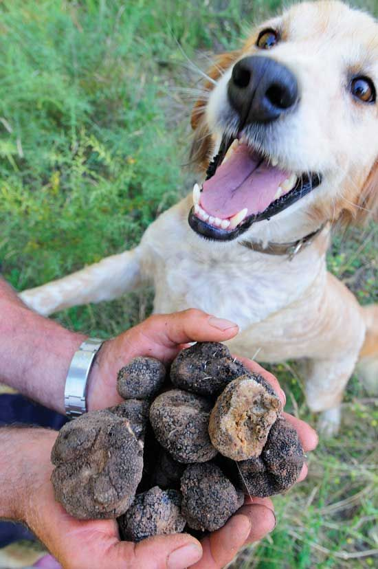 How to Grow Truffles in the United States – Farm and Garden – GRIT Magazine