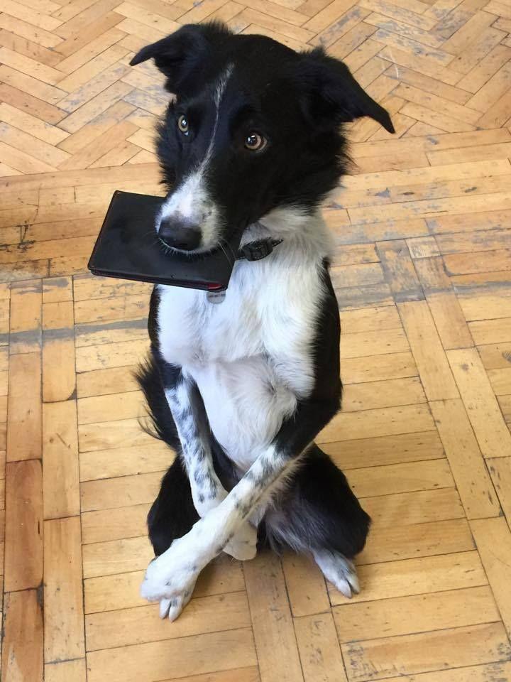Everyone wants Woolet #wearables #geek #gadgets #fashion #wallet #dog #funny