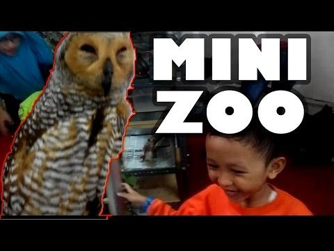 Mini Zoo di Mall | Keanu Kids