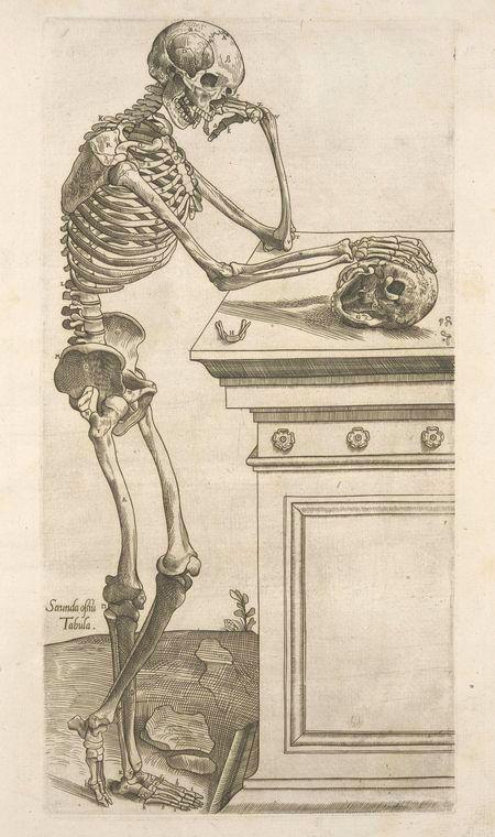 Engraving, Secunda ossium tabula [Human skeleton inspecting a skull and in deep thinking]. Geminus, Thomas,   d. 1562 -- Author