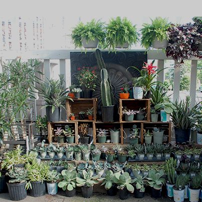 Succulents here, succulents there, succulents everywhere at our Whitby store! #Succulents #Display