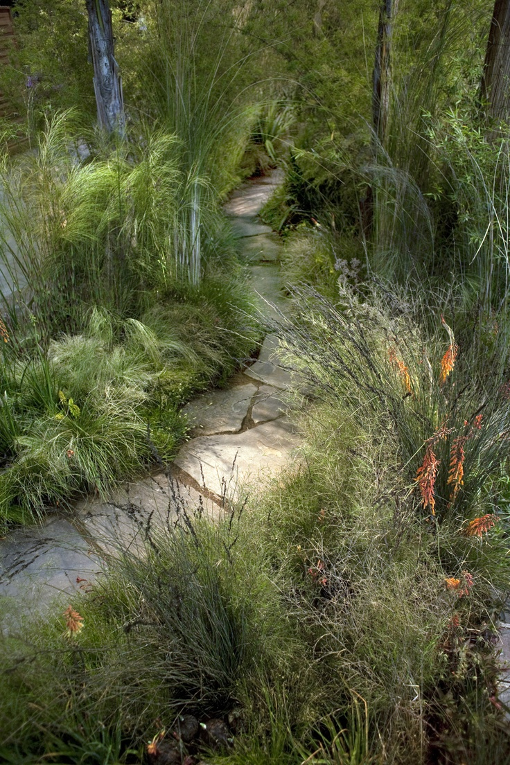 242 Best Images About Ornamental Grasses On Pinterest
