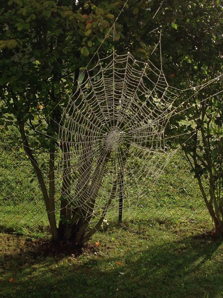 Fleißige Spinne - Spinnennetz im Spätsommer