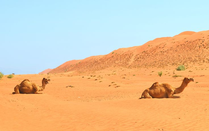 Wahiba Sands - The great Wahiba sands are longitudinal dunes 200 km long and 100 km wide running south from the Eastern Hajars to the Arabian Sea.