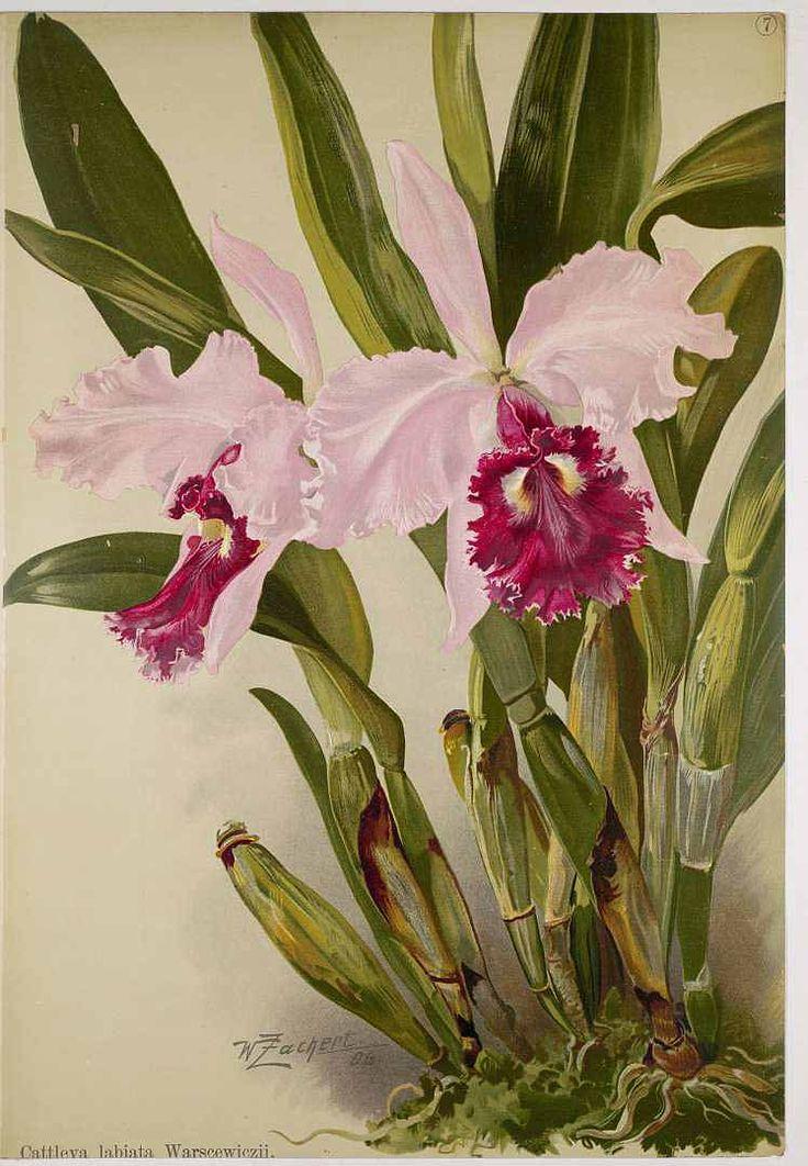 25 beste idee n over dessin orchid e alleen op pinterest tatouage orchidee orchideetatoeage - Dessin d orchidee ...
