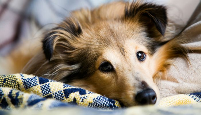 Here are my favorite 7 DIY tips for cleaning up dog hair. From using dryer sheets to pick up dog hair to using a damp sponge on furniture, these are all
