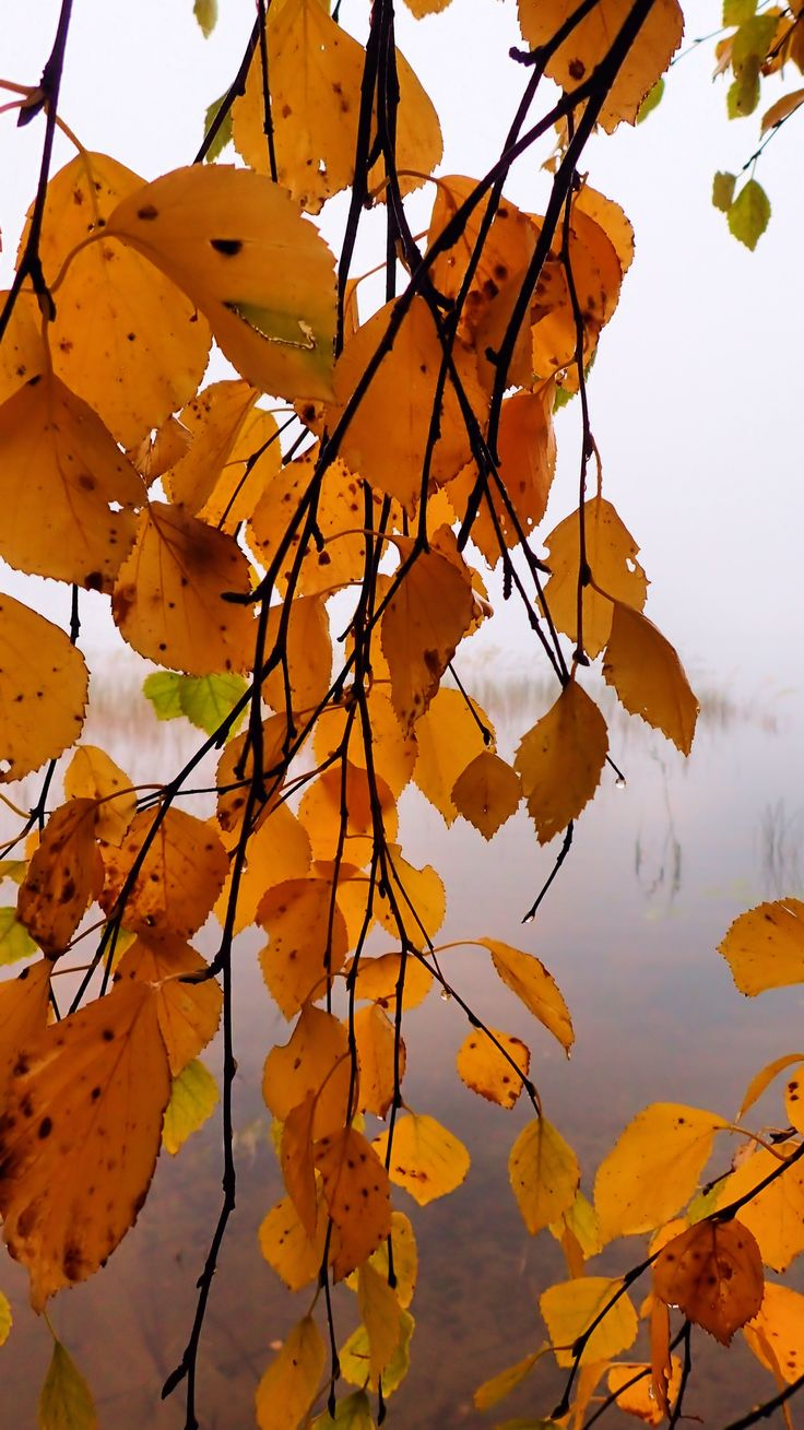 Foggy and moist, Finland 26th September 2017.