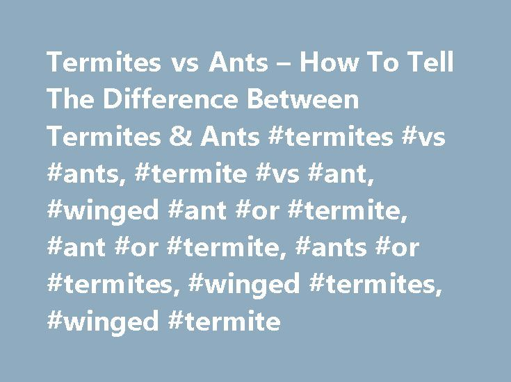 Termites vs Ants – How To Tell The Difference Between Termites & Ants #termites #vs #ants, #termite #vs #ant, #winged #ant #or #termite, #ant #or #termite, #ants #or #termites, #winged #termites, #winged #termite http://louisiana.remmont.com/termites-vs-ants-how-to-tell-the-difference-between-termites-ants-termites-vs-ants-termite-vs-ant-winged-ant-or-termite-ant-or-termite-ants-or-termites-winged-termites-win/  # Did you know that nationwide, termites cause on average over a billion dollars…
