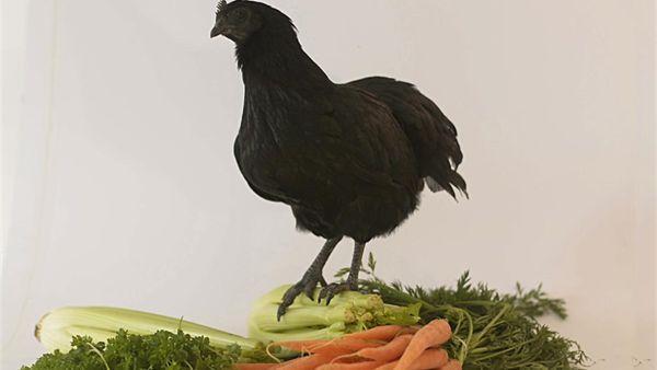 Het is pure magie van Maggi. Een kippenbouillonblokje heeft bar weinig met kip van doen. Maar er is geen haan die ernaar kraait. Je koopt een blokje...