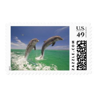 Bottlenosed Dolphins Leaping In Caribbean Sea Postage