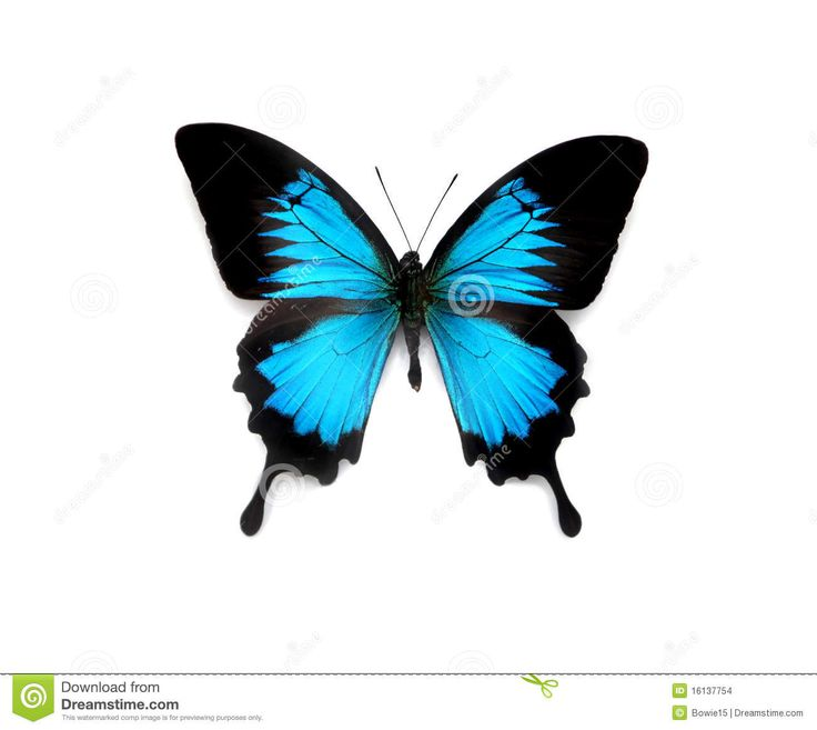 Butterfly - Download From Over 37 Million High Quality Stock Photos, Images, Vectors. Sign up for FREE today. Image: 16137754