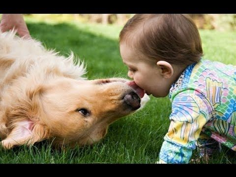 Funny Dogs giving Babies Kisses Compilation 2015