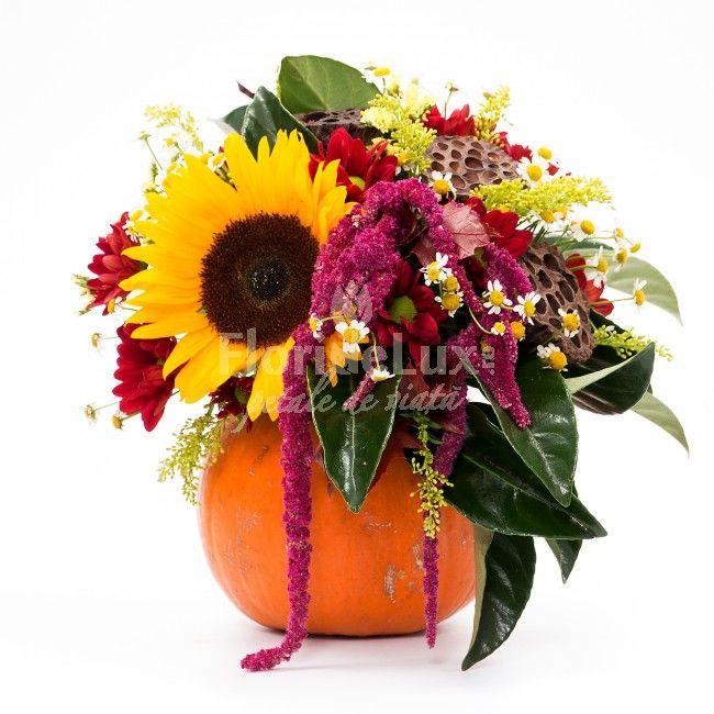 Intampinam toamna cum se cuvine alaturi de dovlecii nostri naturali, plini cu flori aducatoare de zambete si caldura in suflete! 🍁🍂 Flori de toamna, dovleci cu flori WOW, doar aici: https://www.floridelux.ro/flori-de-toamna/